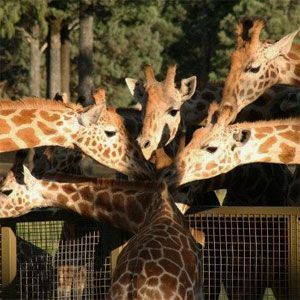 Western Plains Zoo