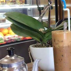 Thang Nga Cafe