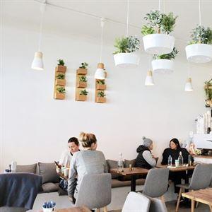 Cronulla Junction Cafe