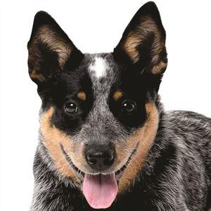 Cattle Dog Cafe & Florist