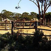 Coolgardie Camel Farm Logo