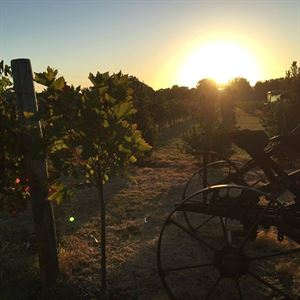 Pinelli Wines