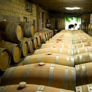 The 19 Best Murrumbateman Wineries Wineries In