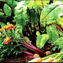 Warm Red Salad